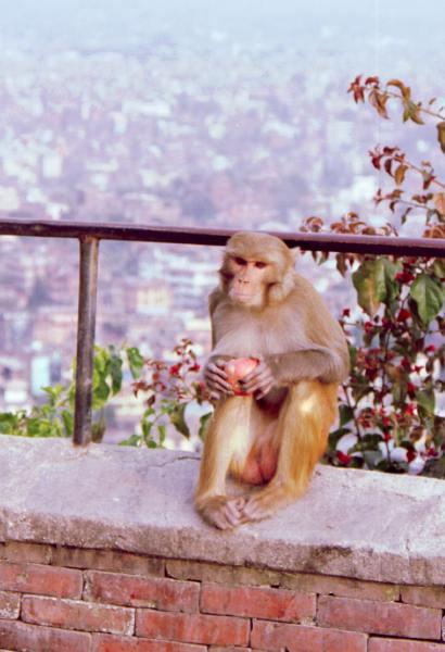 Нам позируют на фоне Катманду